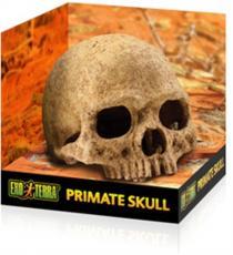 Decor terariu Hagen Exo Terra Primate Skull PT2855