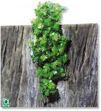 Plante pentru terariu, JBL TerraPlanta Amaz.Philo L31