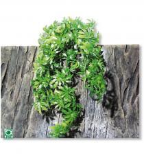 Plante pentru terariu, JBL TerraPlanta Canabis M26